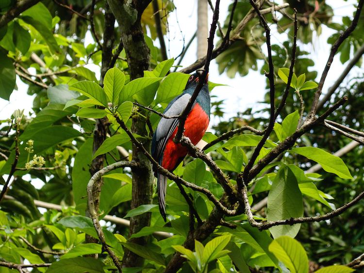 Costa rica route backpacke Puerto Viejo birdwatching