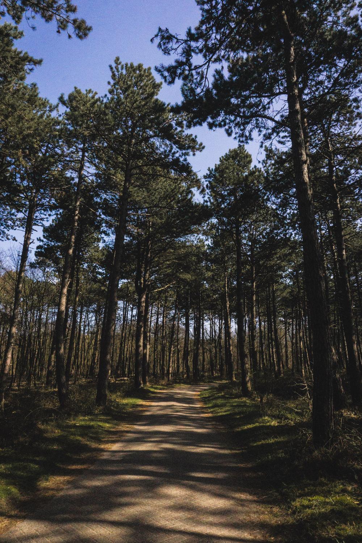 Wandelen in het Noordhollands Duinreservaat
