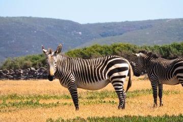 De Hoop Nature Reserve Zuid Afrika