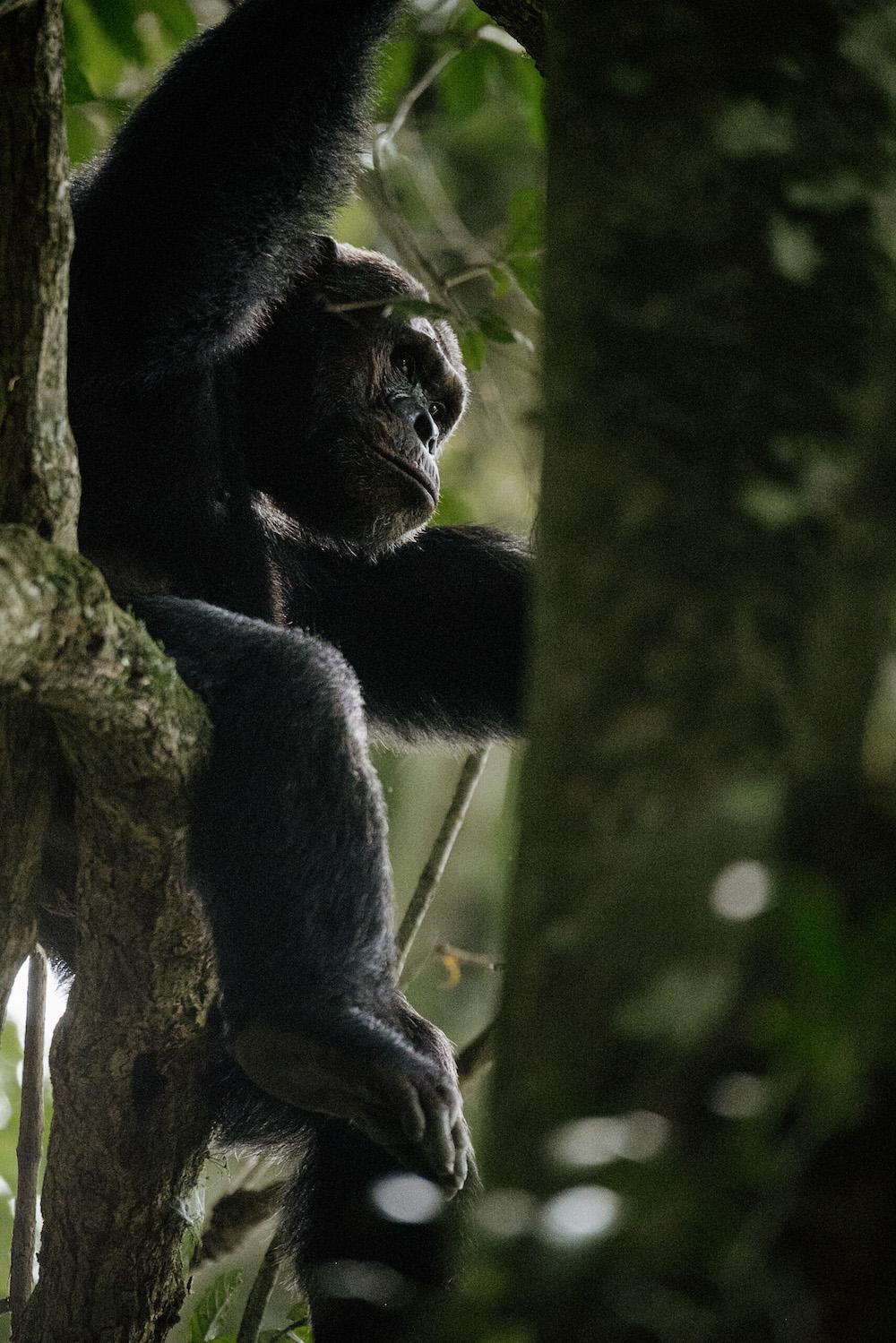 Dieren Rwanda reizen
