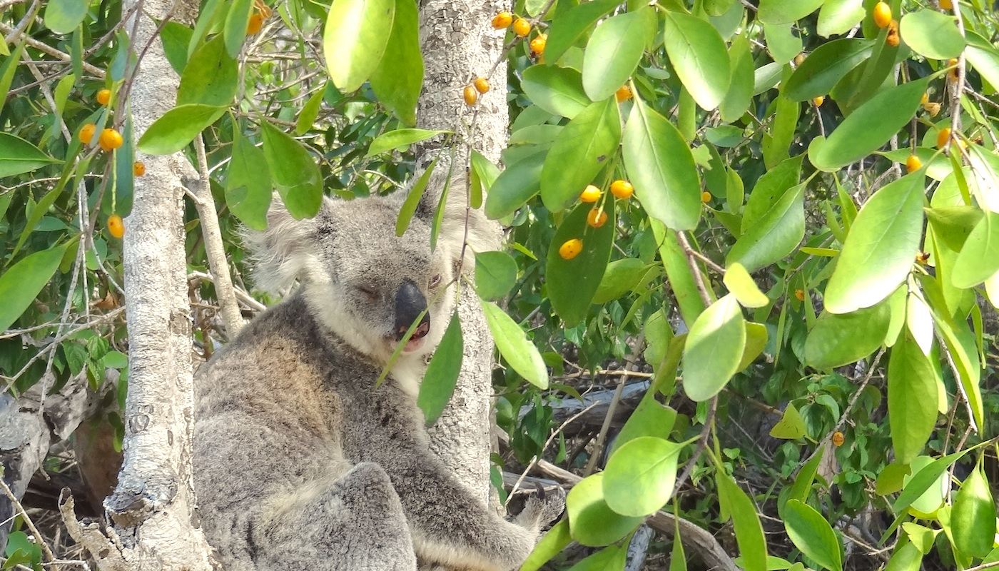 Dieren in Australie