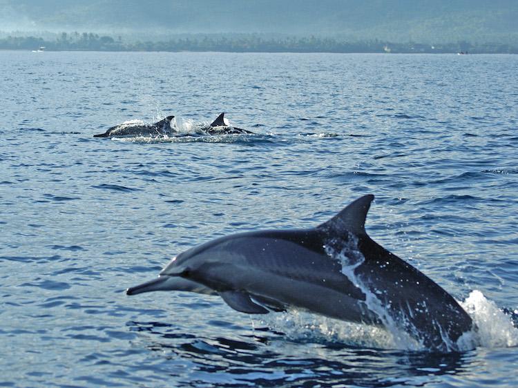 dolfijnen excursies met dieren niet doen