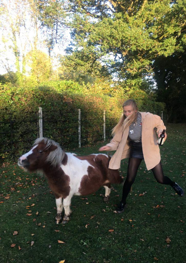 Dorset wilde paarden