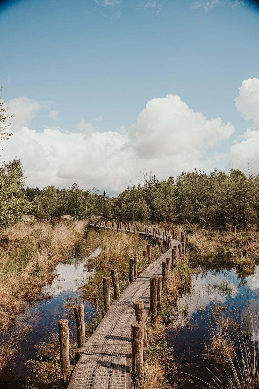 Drenthe plankenpad in Dwingeloo