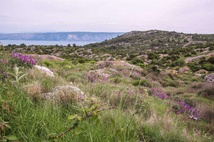 Eilandhoppen kroatie Hvar heuvels lavendel