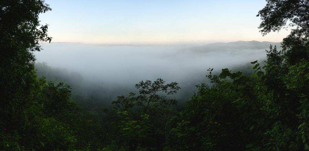 El Zotz guatemala jungle
