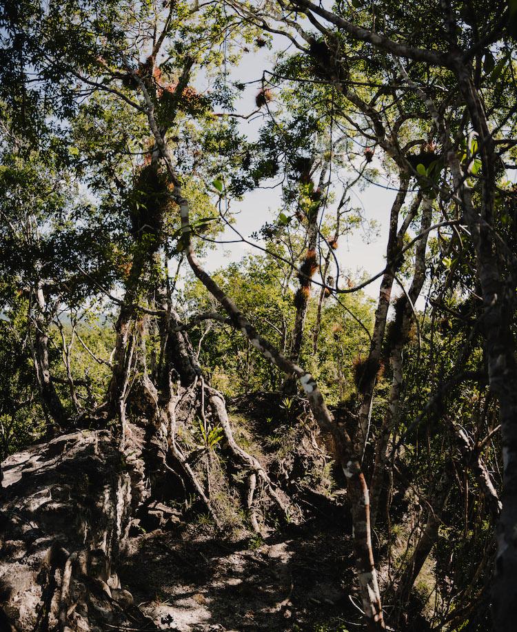 El Zotz jungle guatemala