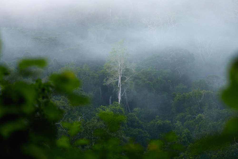 El Zotz jungle omgeving guatemala