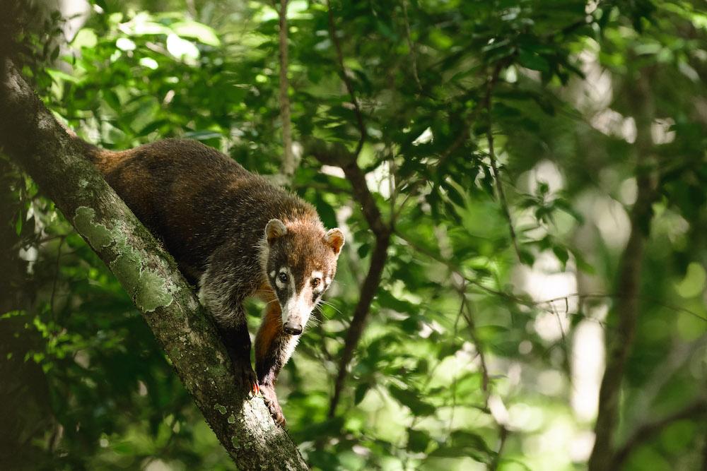 El mirador Guatemala dieren