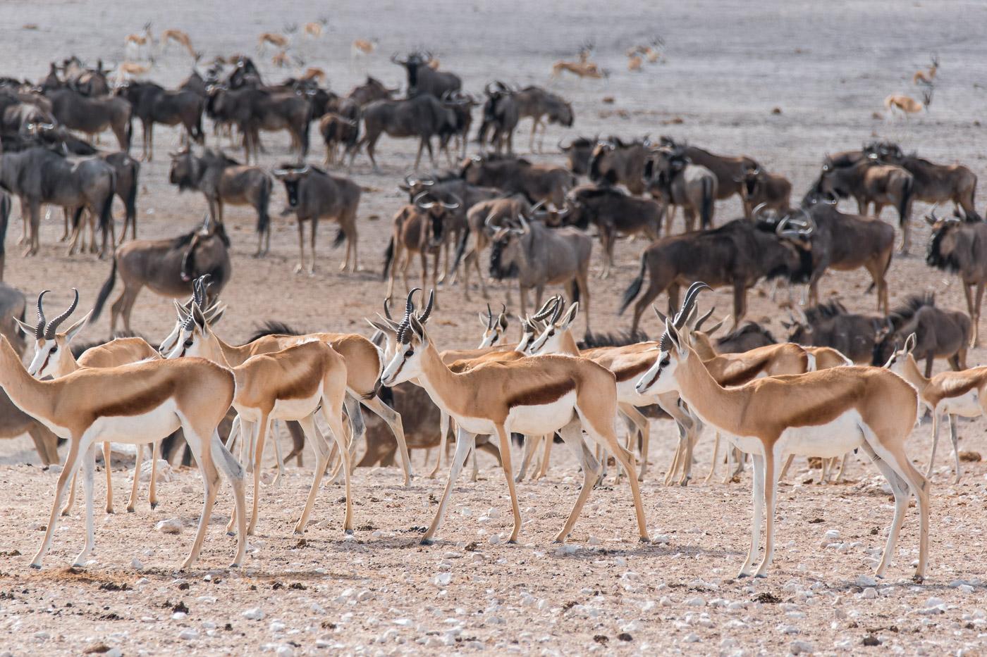 Etosha national park Namibie waterhole-2