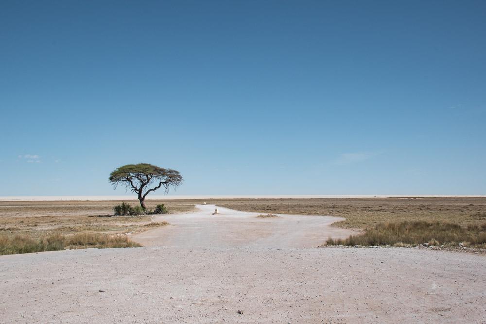 Etosha national park Namibie wegen