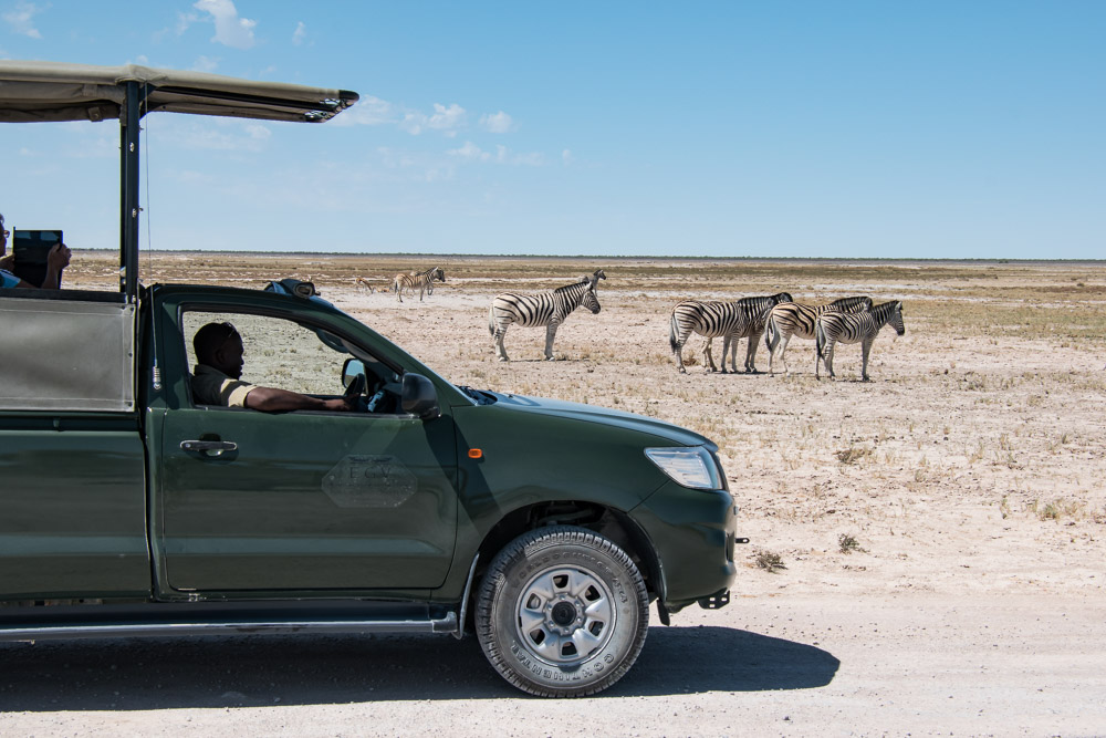 Etosha national park Namibie zebra jeep safari