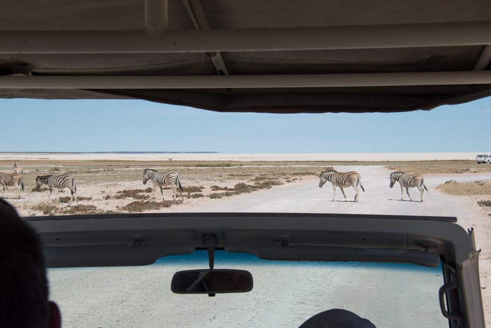 Etosha national park Namibie zebra's