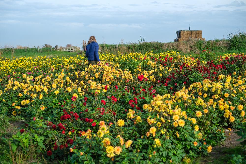 Fietsen op Texel bloementuin