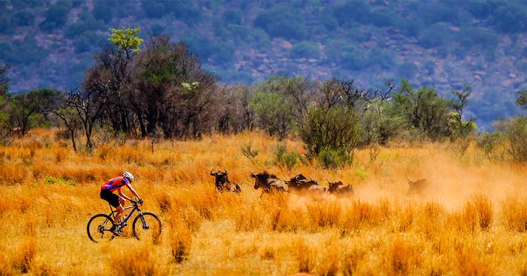 fietser-bij-bisons