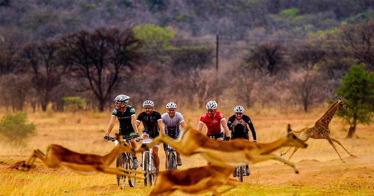 fietsers-en-gazelles