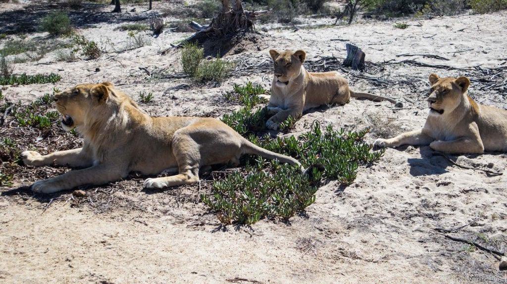 Fietssafari doen in omgeving kaapstad tips