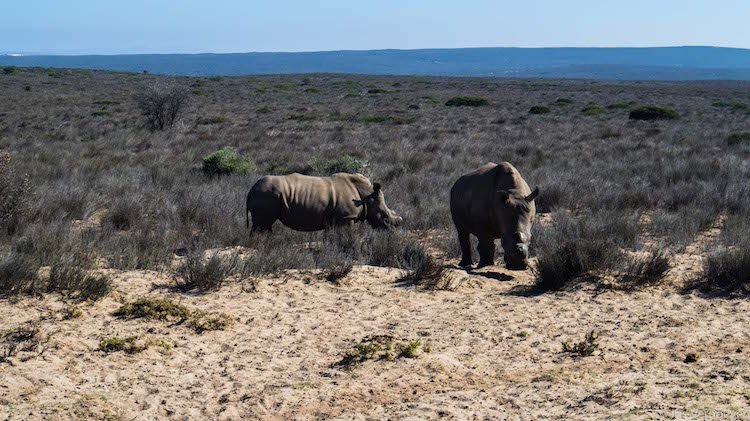 Fietssafari omgeving kaapstad neushoorns