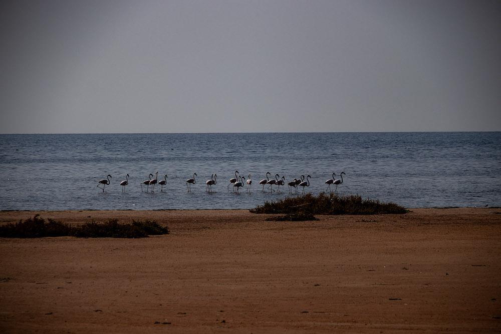 Flamingo spotten djerba tunesie