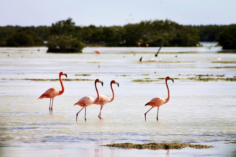 Flamingo's in Montemar National Park