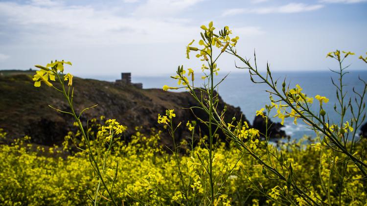 Fort Hommet met bloemen
