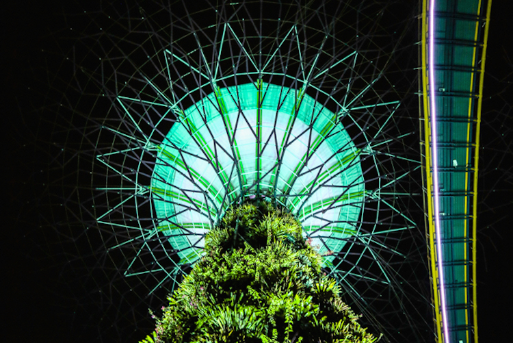 Gardens by the bay show singapore trees