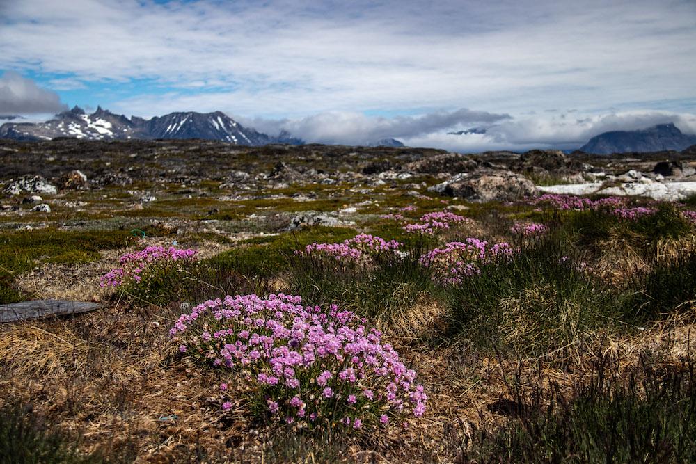Groenland naij Nanortalik