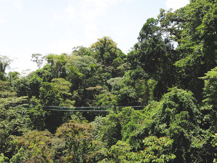Hangbruggen in jungle costa rica