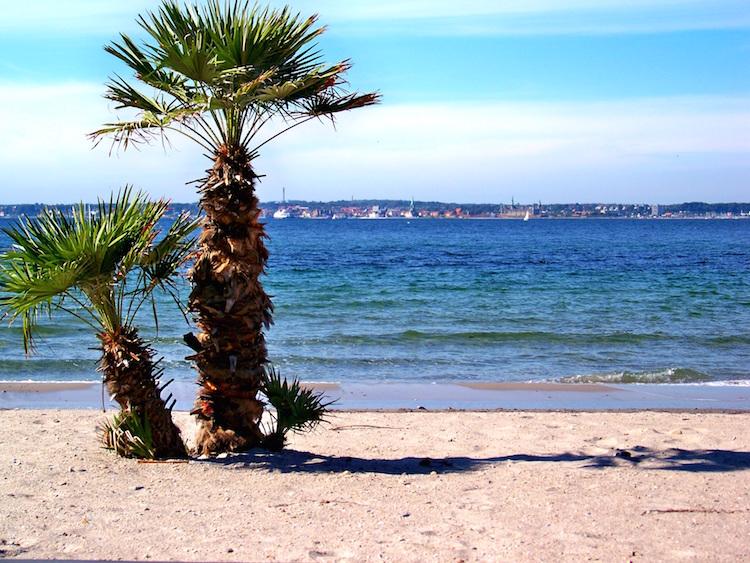 Helsingborg_Tropical Beach