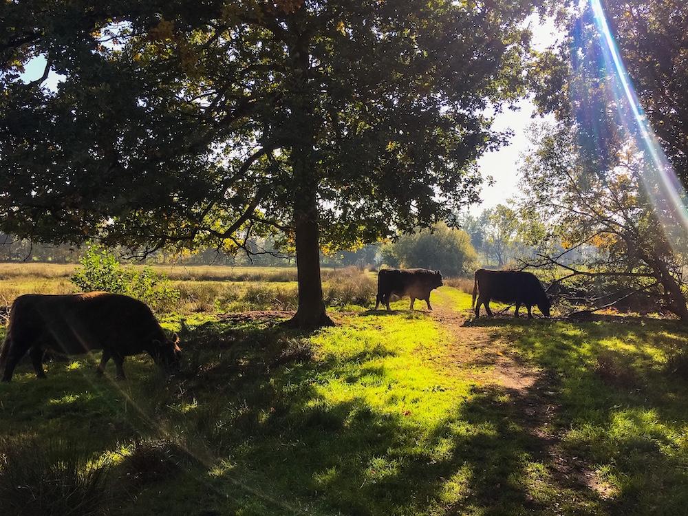 Het Hageven Belgisch Limburg
