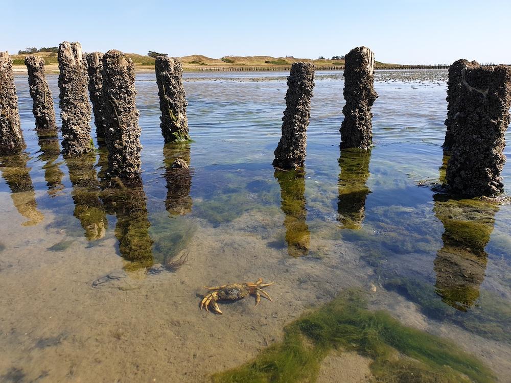 Het eiland Mando in Denemarken