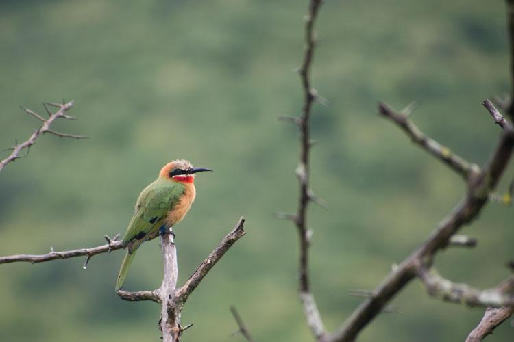 Hluhluwe zuid afrika birdwatching