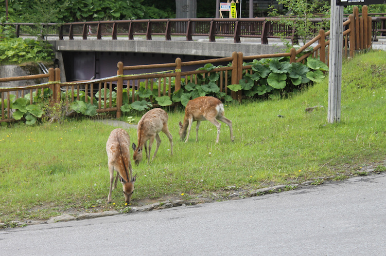 Hokkaido japan Sounkyo hertjes