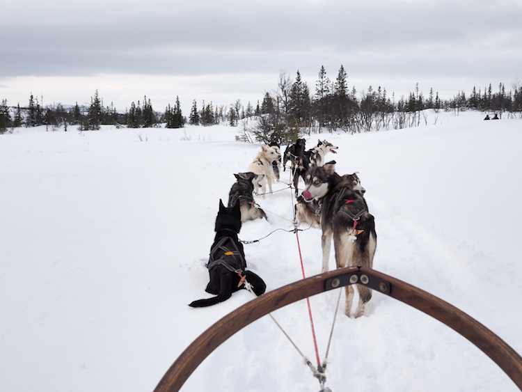 huskytocht in lapland activiteiten