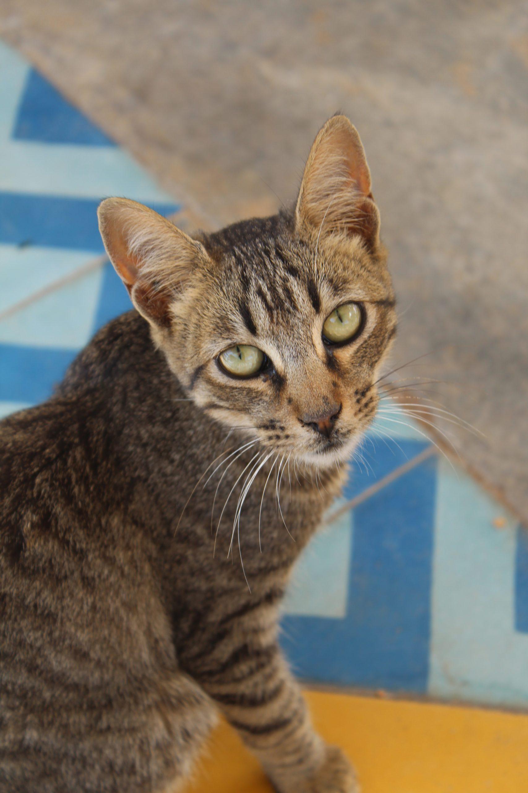 Kat in de zon van Taghazou