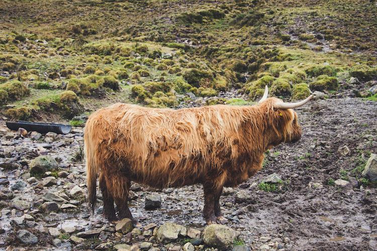 Isle of Skye tour schotse hooglander