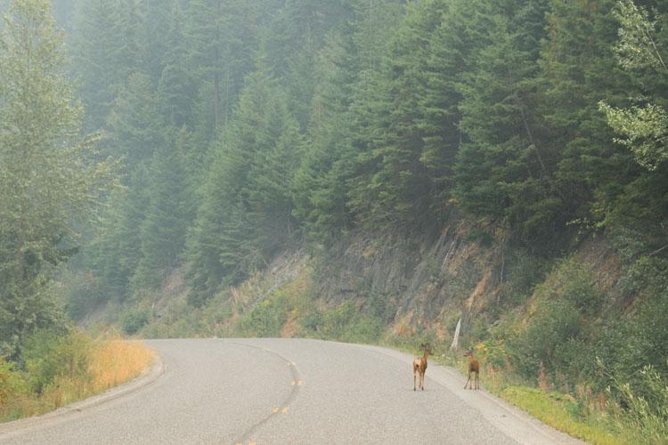 Jasper National Park roadtrip wildlife weg