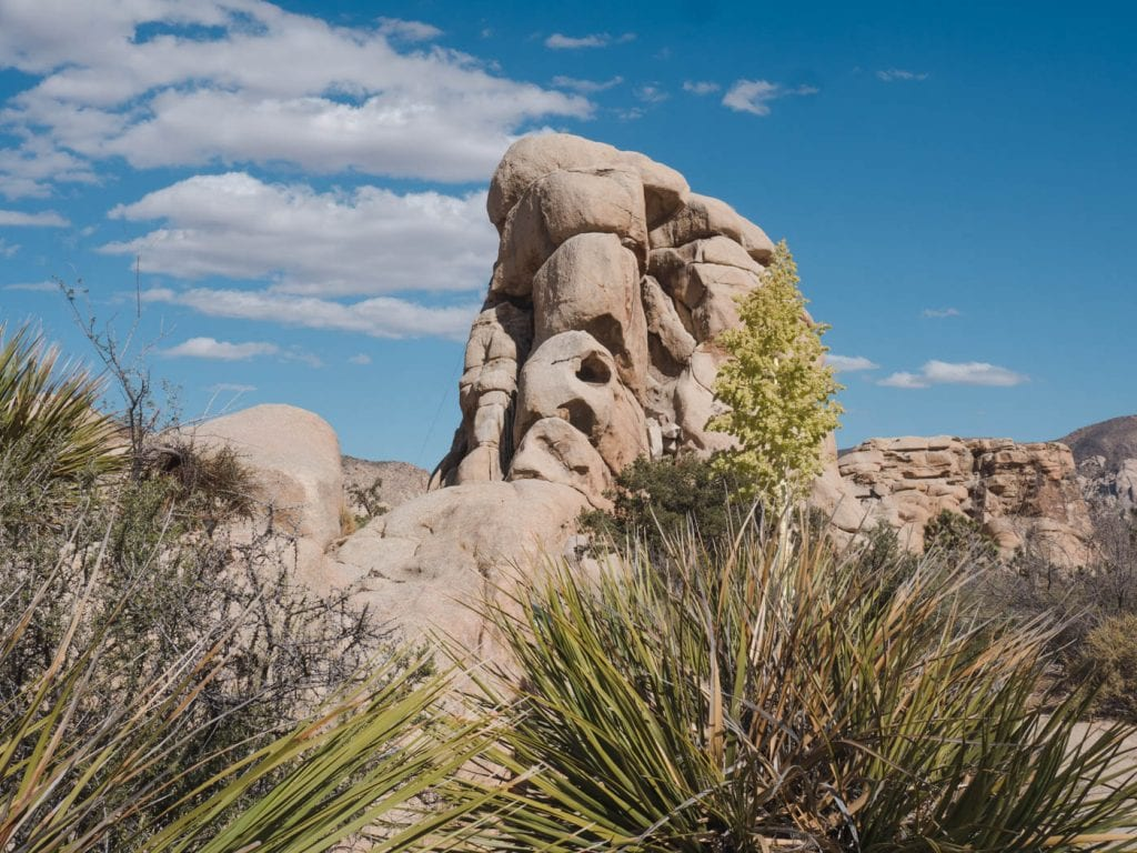 joshua tree national park tips rotsen