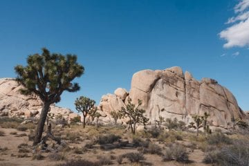 Joshua boom joshua tree national park tips