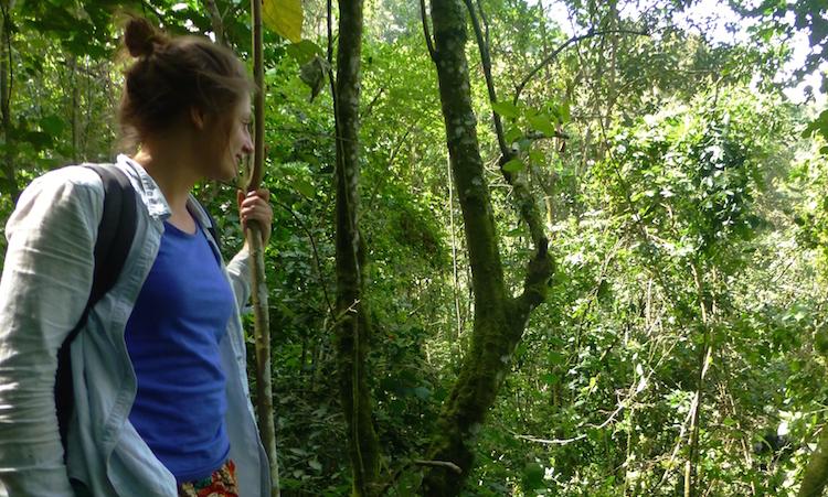 Jungle berggorilla's oeganda bezoeken