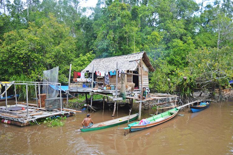 Jungle borneo rivier