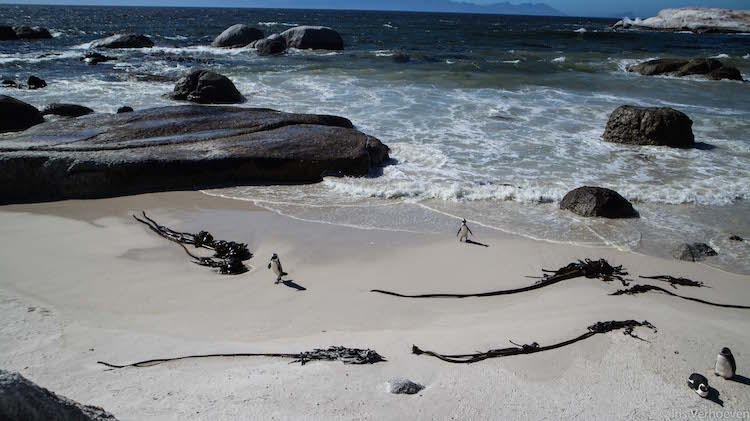 Kaapstad tips boulders beach