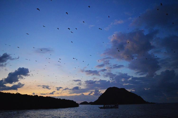 kalong-eiland-komodo-eilanden
