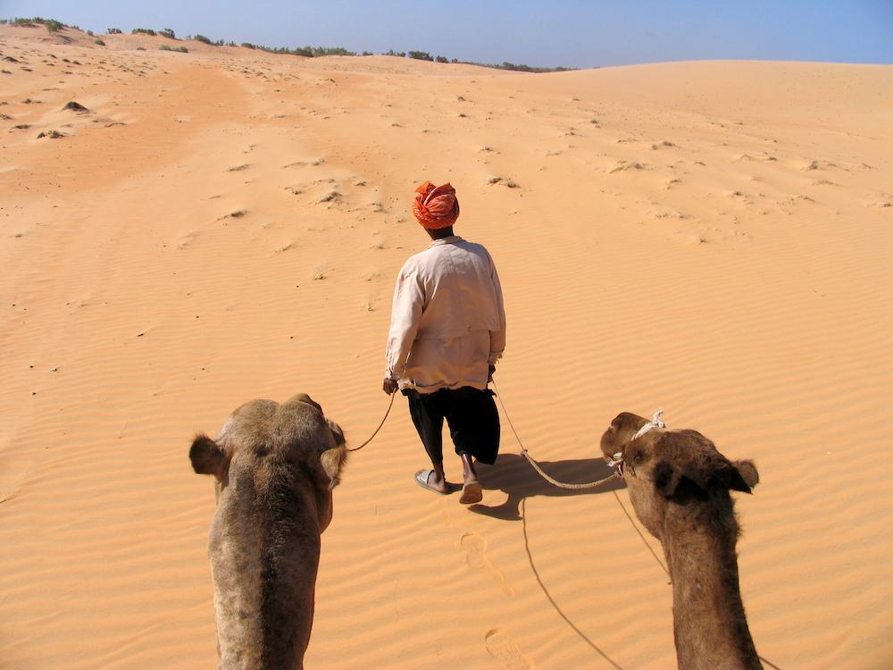 Kamelen in Lompoul, Senegal