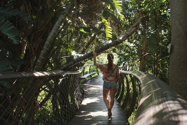 Kirstenbosch kaapstad botanische tuin