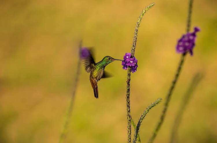 Kolibries jungle costa rica sky adventures