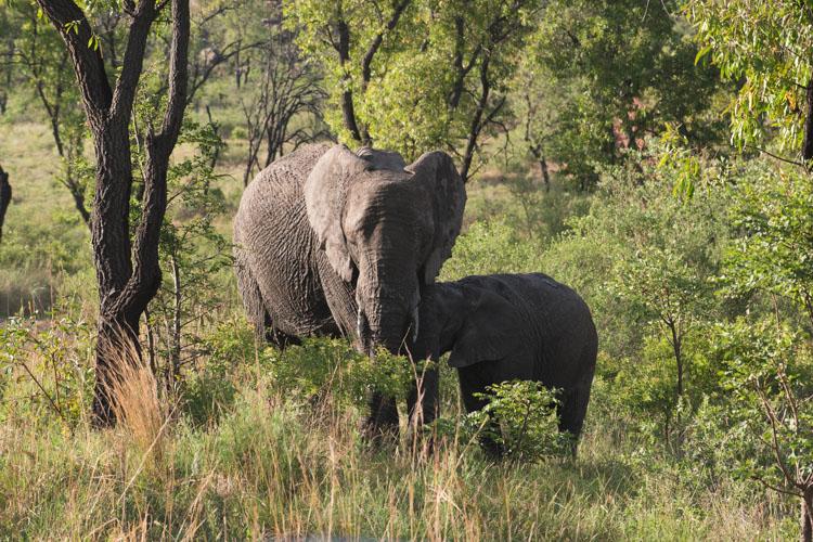 Kololo Game Reserve olifanten