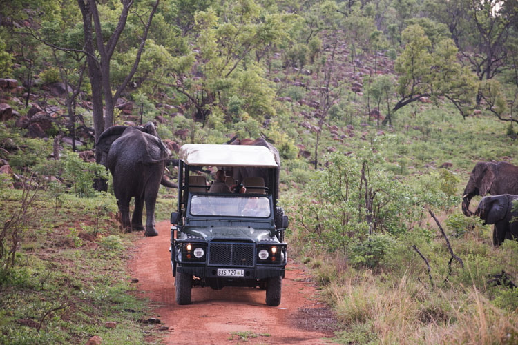 Kololo Game Reserve safari in welgevonden