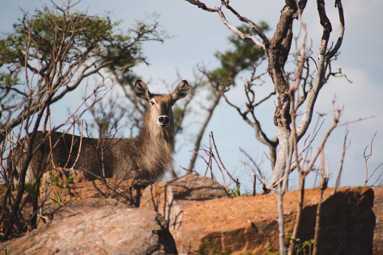 Kololo Game Reserve safari wildlife