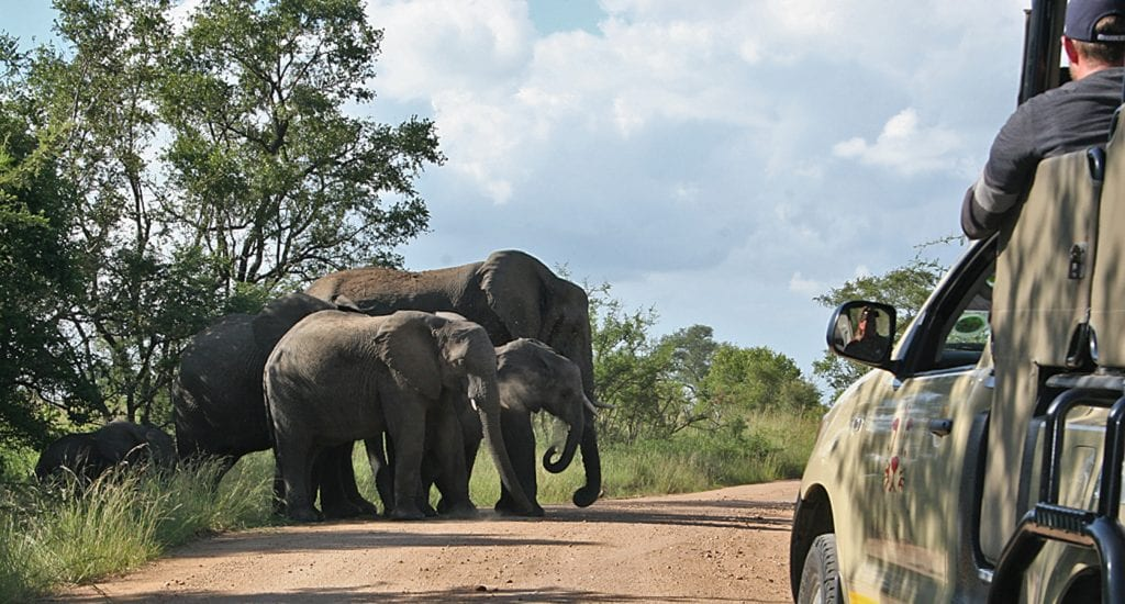 overnachten in krugerpark 5 mooie camps! wearetravellerskrugerpark game drive olifanten